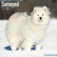 Samoyed Wall Calendar 2018 by Avonside