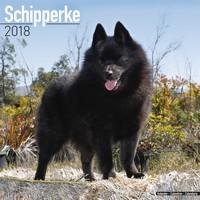 Schipperke Wall Calendar 2018 by Avonside