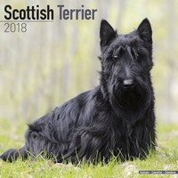 Scottish Terrier Wall Calendar 2018 by Avonside