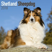 Shetland Sheepdog Wall Calendar 2018 by Avonside