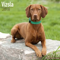 Vizsla Wall Calendar 2018 by Avonside