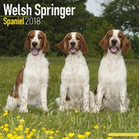 Welsh Springer Spaniel Wall Calendar 2018 by Avonside