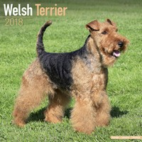 Welsh Terrier Wall Calendar 2018 by Avonside