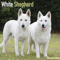 White Shepherd Wall Calendar 2018 by Avonside