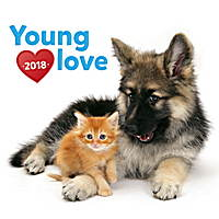 Young Love Kittens and Puppies Calendar 2018 by Presco Group